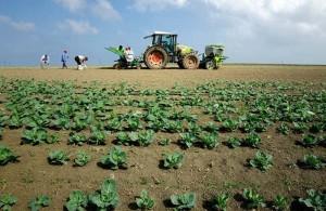 coltivazioni-