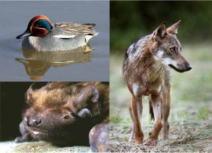 Monitoraggio fauna al Padule