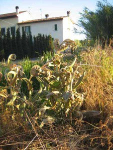 Effetto aria pulita sulla vegetazione