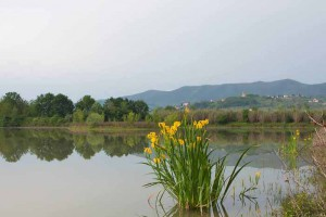 Il lago di Zela alla Querciola di Quarrata