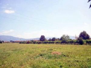 E i ladri possono fuggire indisturbati sul retro in questi campi (sullo sfondo via Ceccarelli)