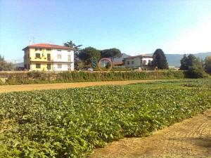 Il camino del Cis è a 800 metri da un campo coltivato