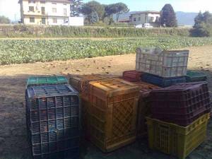 Verdure pronte per la raccolta e... presto sulle tavole