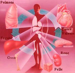 Organi, tessuti e trapianti